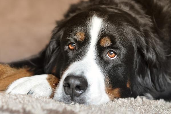 gli occhi del cane ti dicono se è stressato
