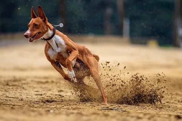 il cane scatta quando è sollevato