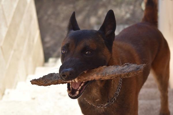 il tuo cane ti porta i regali