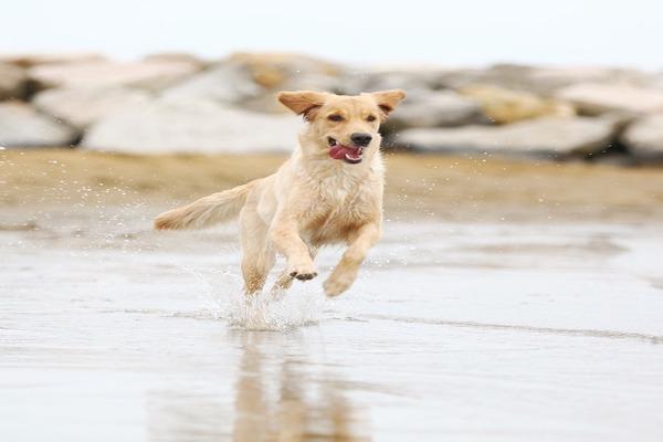 Le motivazioni del sbilanciamento in corsa del cane