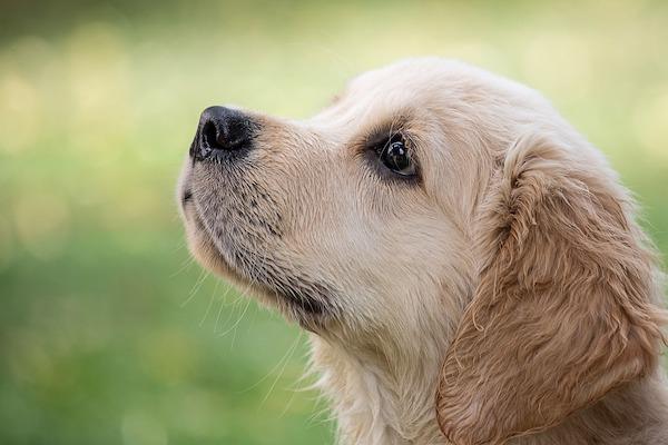 come insegnare al cane a contare