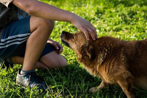 Il cane è sensibile, attenzione alle punizioni