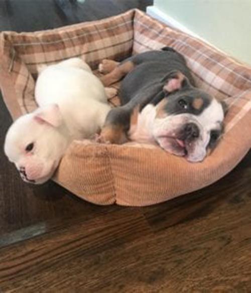 Cane nato con 5 zampe abbandonato dall'allevatore