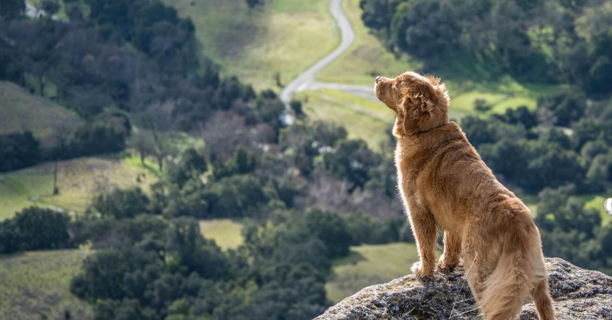 cane in montagna