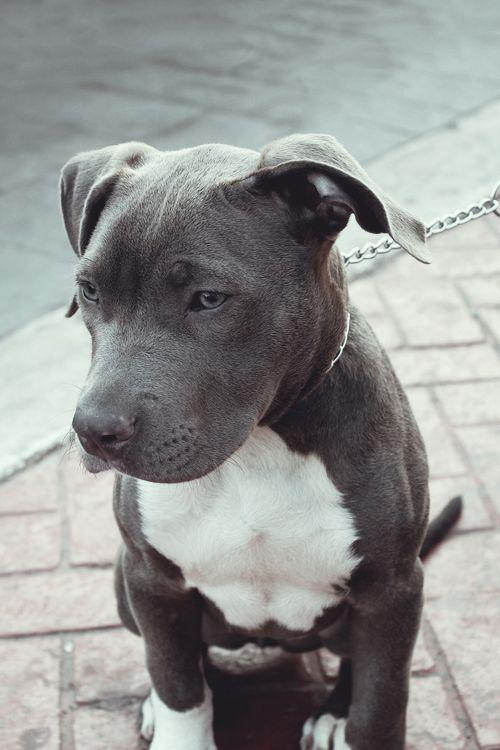 Eva, il cane abbandonato per 4 lunghi anni davanti al parrucchiere