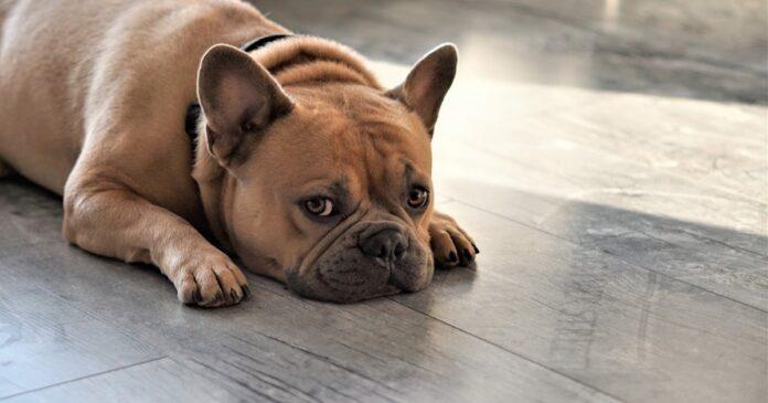 Come insegnare al cane a vergognarsi (per finta!)