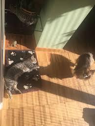 gigia-gatto