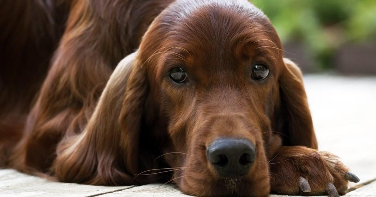 perdita di peso e respiro affannoso nei cani