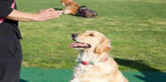 Insegnare al cane a contare: ecco come fare