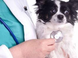 aborto spontaneo per infezione nel cane