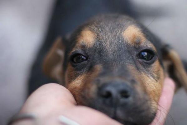 I cani mangiano le ghiande? È sicuro fargliele mangiare?