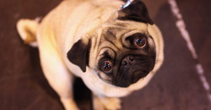 cane che guarda
