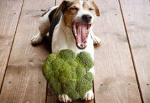 cane che sbadiglia