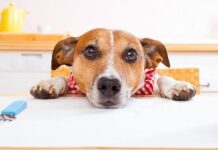 cane a tavola