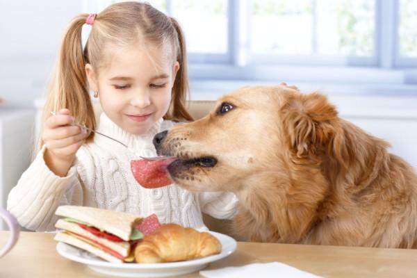 cane mangia il salame