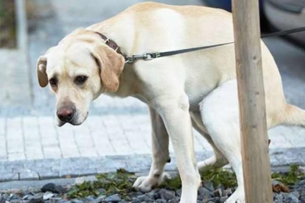 I cani provano imbarazzo? In che forma?