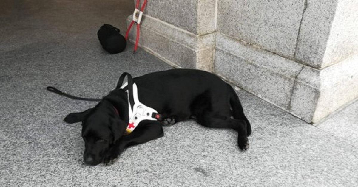 il-cane-guida-viene-rifiutato-da-un-signore-in-chiesa-e-subito-polemica