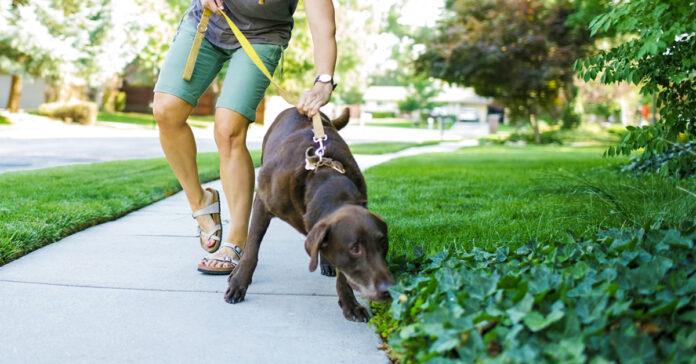 cane e formiche
