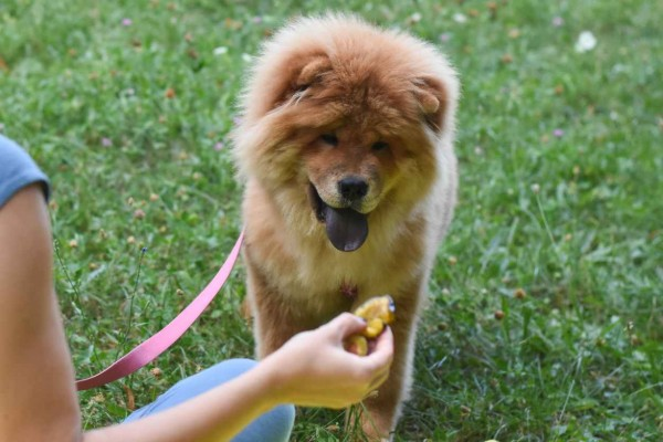 cane mangia la prugna