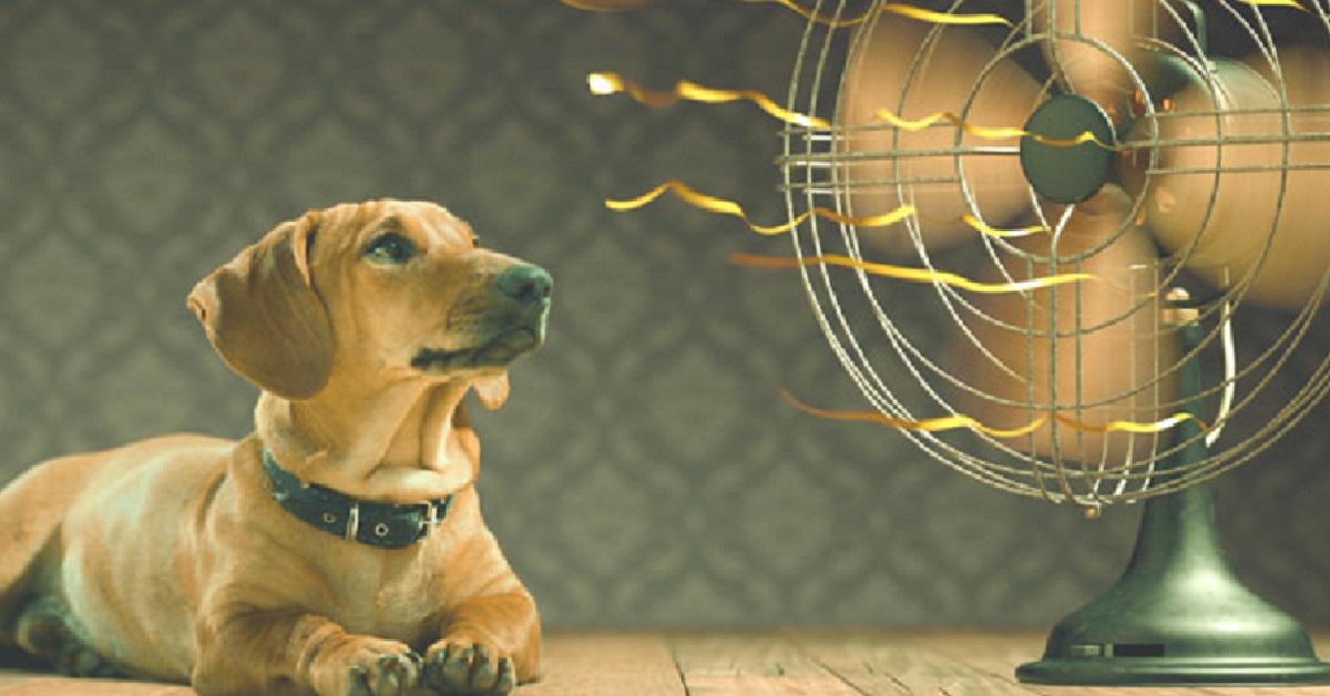 ai cani serve il ventilatore