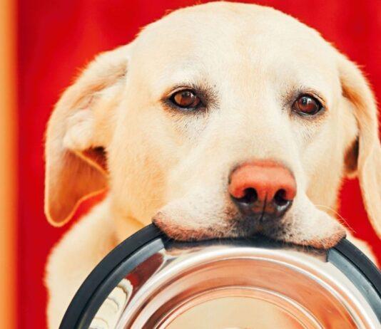 cane affamato