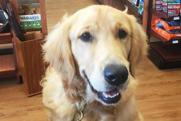 Il cane può mangiare il caramello?