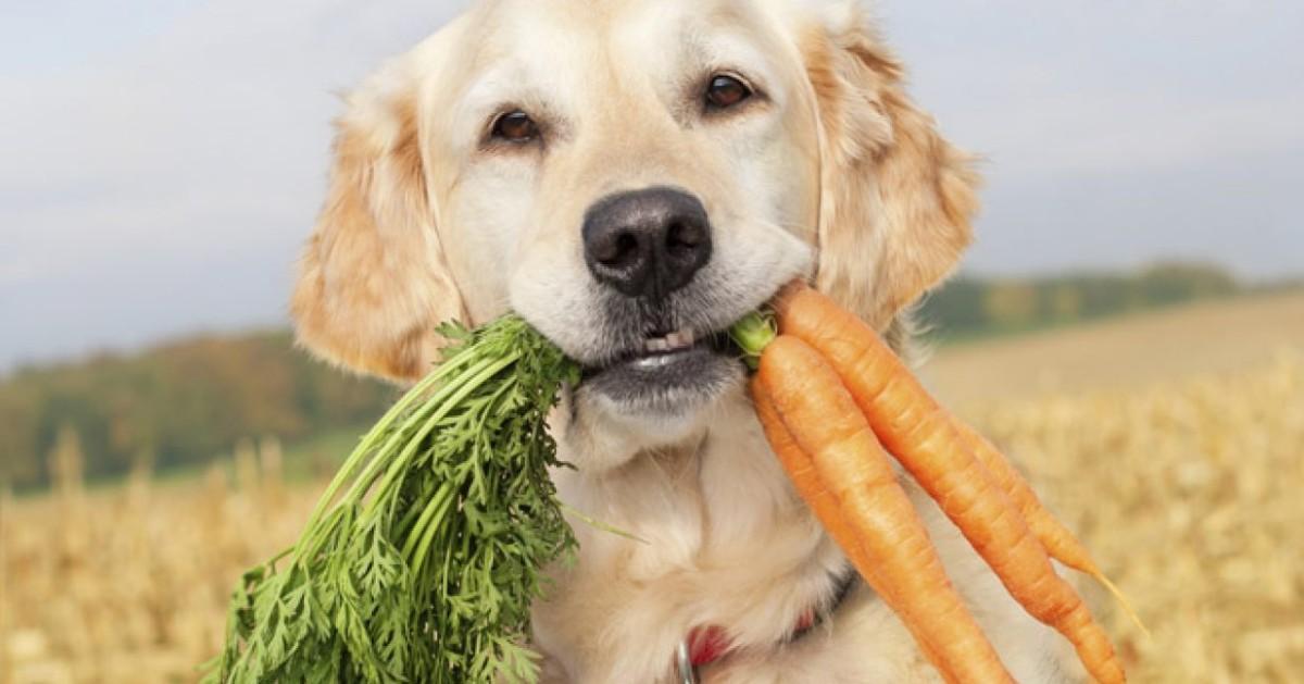 cane con le carote in bocca