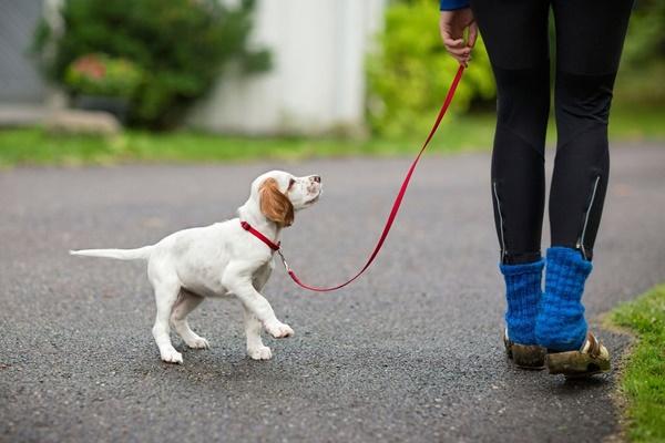 portare a passeggio il proprio cucciolo