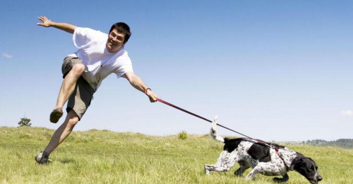 cane e guinzaglio