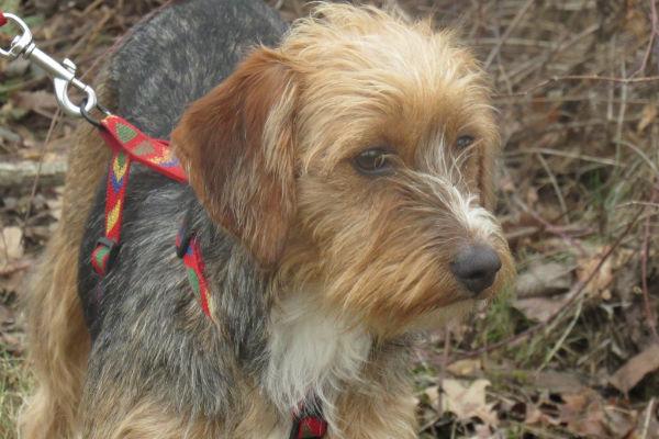 Insegnare al cane a non tirare al guinzaglio: ecco come fare