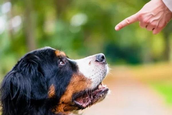 Insegnare al cane il comando stai: ecco come