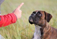 comando stai al cane
