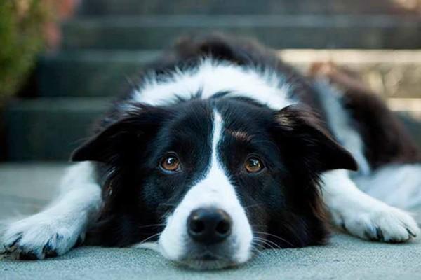 Ipercloremia nel cane: in cosa consiste e come trattarla