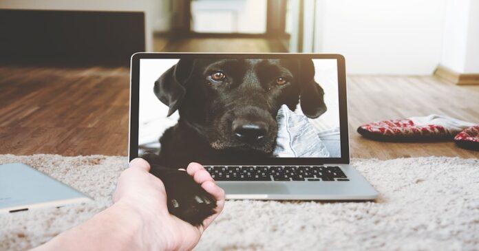 Videochiamata con il cane: Fido ci riconosce oppure no?