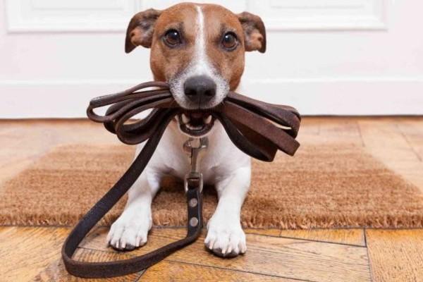 Come lavare il guinzaglio del cane, il collare e la pettorina