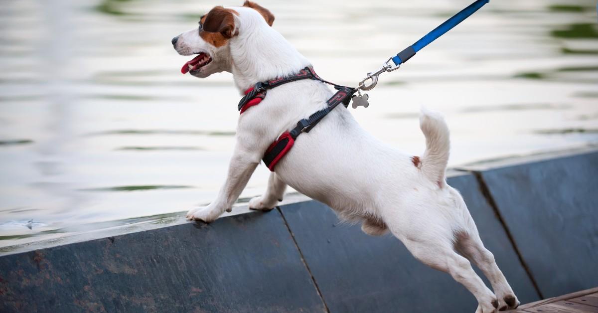 cane tira il guinzaglio