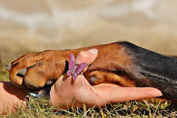 il cane vuole dare la zampa