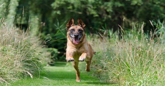 Rinforzo positivo per l'addestramento del cane: cos'è e a che serve