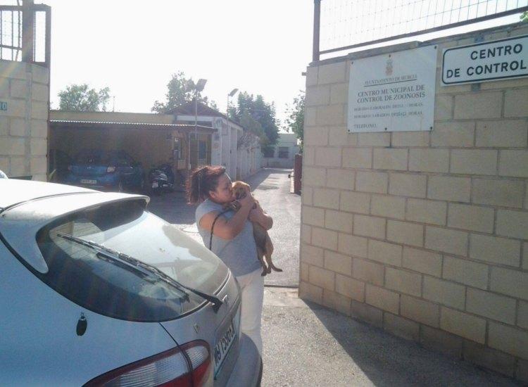 Cane abbandonato con il libretto delle vaccinazioni al collo