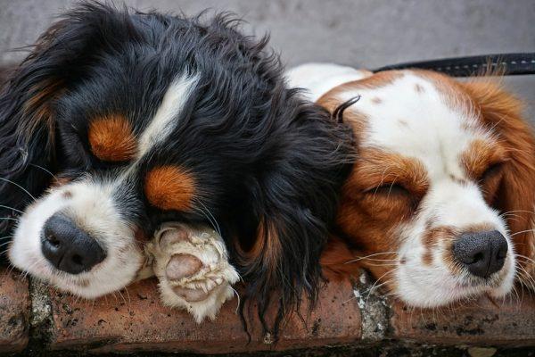 Microchip cane: cos'è, a cosa serve e perché è fondamentale