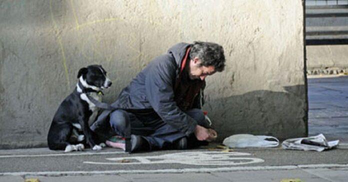 milano-cani-senzatetto-e-proprietari-sapranno-dove-vivere