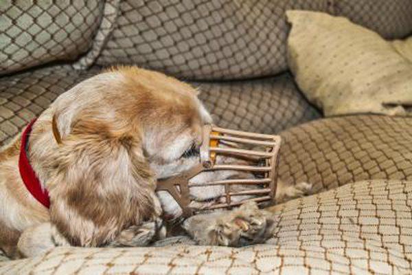 Museruola del cane: tutto quello che bisogna sapere