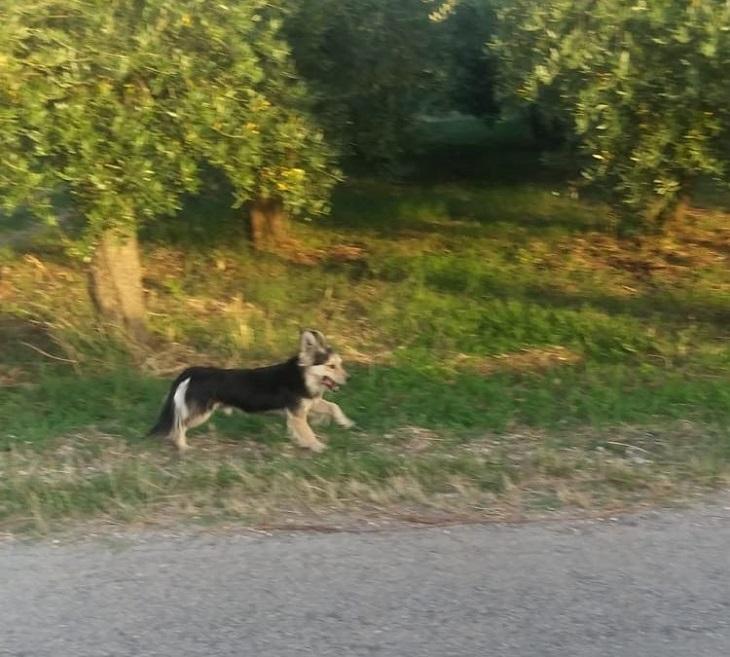 ortona-cane-abbandono