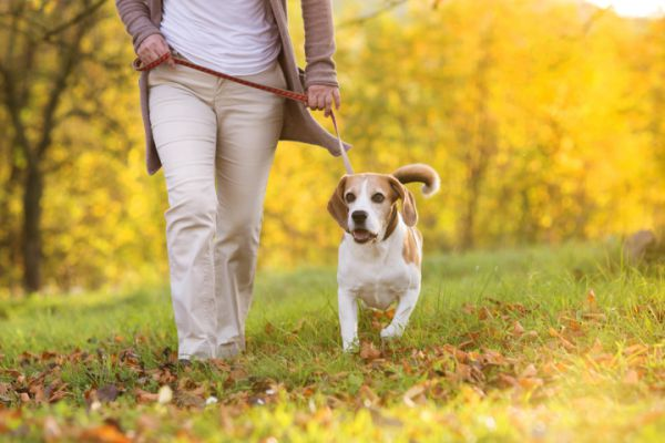 Passeggiata con il cane: leggi e cose utili da sapere