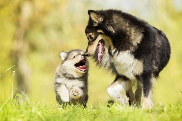 cani corrono sul prato