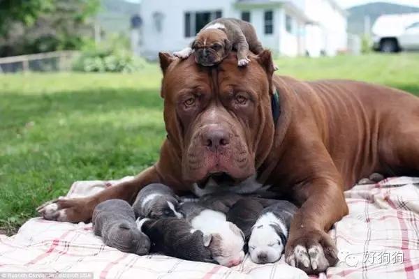 cane con i suoi cuccioli