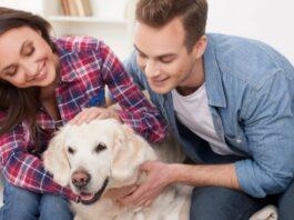 Perché il cane puzza