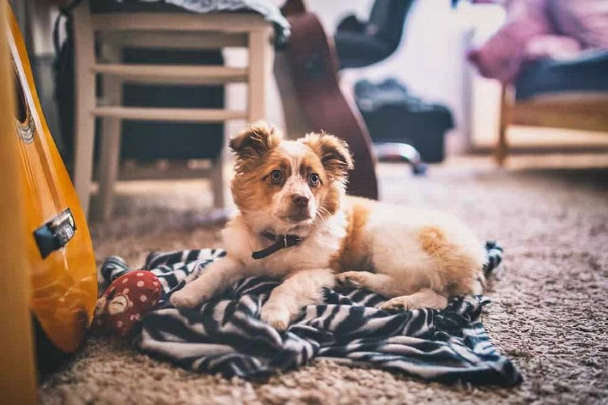cucciolo su una coperta