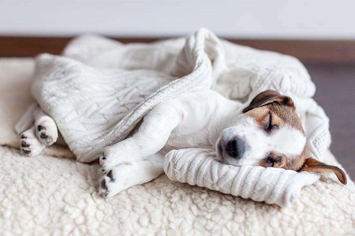 cane dorme su una coperta