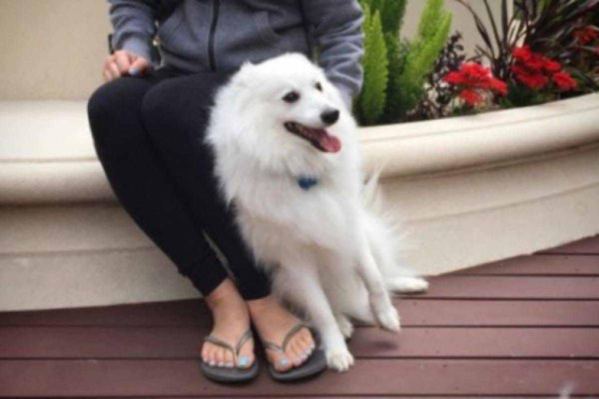 Perché il cane si appoggia a te e ti guarda?